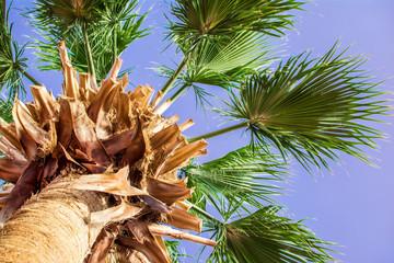 palma summer sky