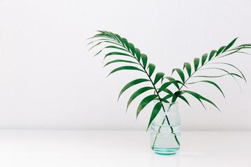Obraz Single green leaf plant in vase on white background. Concept and minimalism. - fototapety do salonu