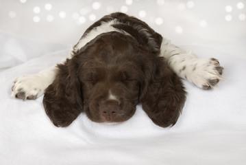 Schlafender Welpe auf weißer Decke