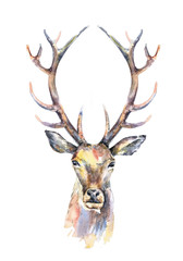 Watercolor illustration. Isolated deer head with beautiful horns on white background.