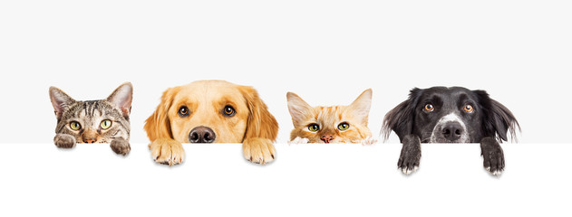 Dogs and Cats Peeking Over Web Banner Wall mural