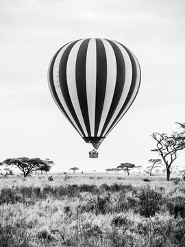 Hot air balloon landing in african savannah. Black and white image.