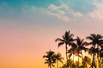 Beautiful tropical sunset. Palm trees and colorful sky.