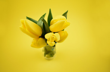 Yellow tulips stock images. Yellow tulips on yellow background. Spring floral decoration. Spring background concept. Yellow tulips bouquet in vase