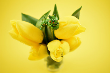 Yellow tulips with caterpillar stock images. Yellow tulips on yellow background. Spring floral decoration. Spring background concept. Yellow tulips bouquet in vase