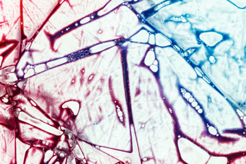 Background of blood in a plastic bag of the donor. Physiological liquids, chemical reagents for analysis