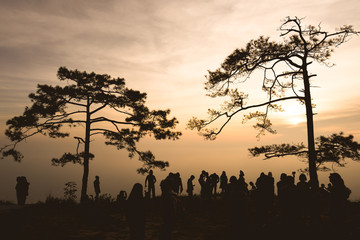 Black silhouette, trees and people, sunrise background