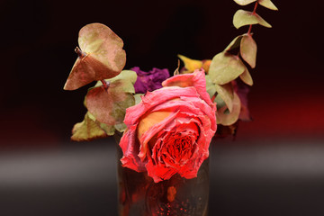 Dried roses with green leaves