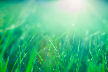 Abstract Grass Background