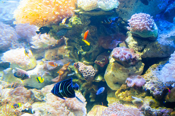 Beautiful colorful fish in the aquarium, Vietnam