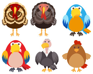 Turkeys and different types of birds