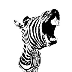 vector image of zebra with open mouth and big teeth, funny lough concept