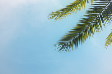 Palm trees against blue sky. travel, summer, vacation and tropical beach concept.