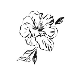 Hand drawn vector abstract artistic ink textured graphic sketch drawing illustration of hibiscus plant flower with leaves isolated on white background
