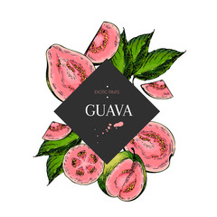 Hand drawn guava whole, sliced, half with leaves in design template. Colored engraved illustration. Square stylish frame composition. Restaurant menu, flyer, banner, poster, exotic fruit summer party
