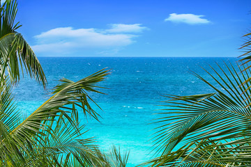 Tropical palm trees on a background of a panorama of a beautiful ocean and blue sky in summer.