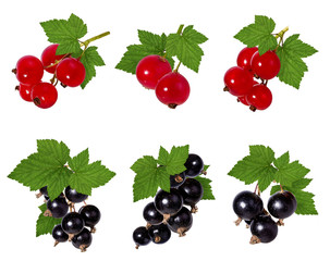 Fototapete - Currant leaf isolated on white background Clipping Path