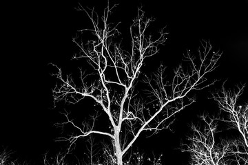 Naked tree branches on a black background