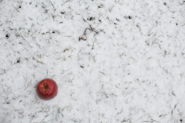 Red apple on snow close-up in frosty winter day