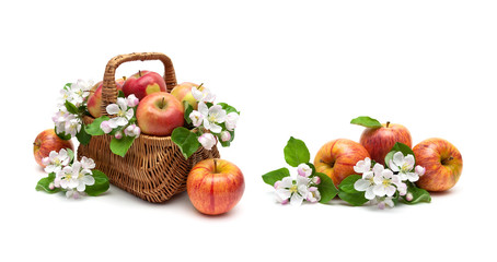 Apples and apple-tree flowers in a basket on a white background.