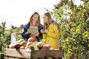 Two smiling women using tablet in apple orchard
