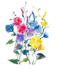 Convolvulus blooming. Bright multicolored flowers. Watercolor background.
