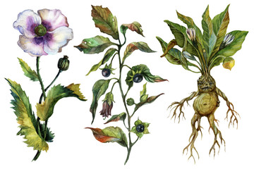 Watercolor attributes of alchemy. Medicinal herbs.