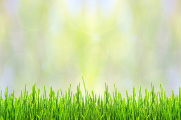 Fototapete - Spring or summer abstract background with green grass and sunlight bokeh lights