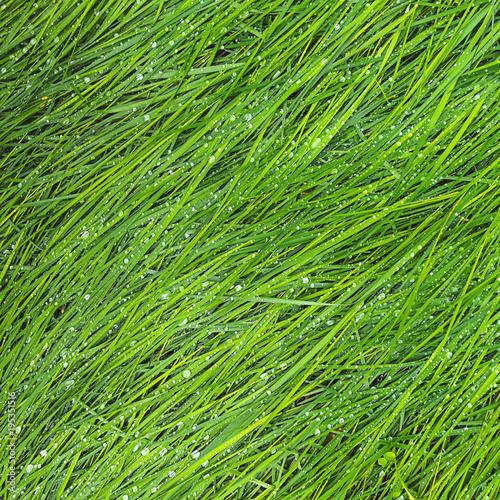 Erba Verde Rugiada Sfondo Stock Photo And Royalty Free Images On