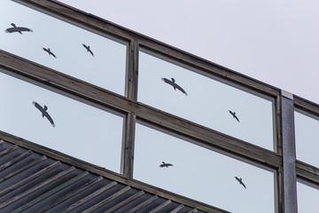 Vogelkollisionen vermeiden, Konzept