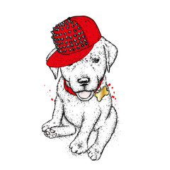 Puppy in a cap. Vector illustration for a postcard or a poster, print for clothes. Cute dog. Labrador. Clothes and accessories.