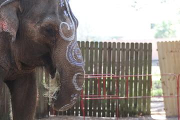 Festive Elephant Eating Hay at the Renaissance Festival