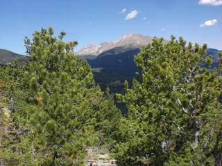 Mountain peak over the trees