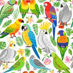 Parrot seamless pattern. Tropical, jungle bird background