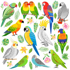 Vector parrot illustration. Tropical bird isolated