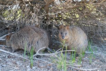 Wildlife of Australia
