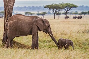 Tuinposter Olifant Elephant mother pushing her baby in Masai Mara National Park in Kenya