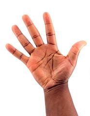 Palm side Hand