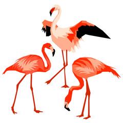 Set of flamingo. Tropical bright abstract birds