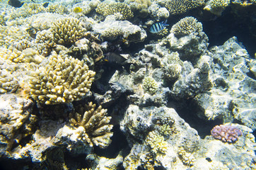 Corals on the reef, background