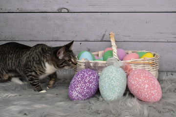 Tabby Manx Cat Easter Portrait
