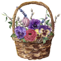 Watercolor basket with flowers. Hand painted tulip, pansies, anemone, ranunculus, willow, lavender and tree branch with leaves isolated on white background. For design, print or background.