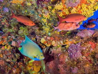 Colorful Fish on Underwater Oil Rig