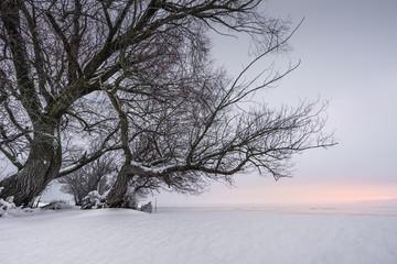 Winterliche Morgenstimmung II