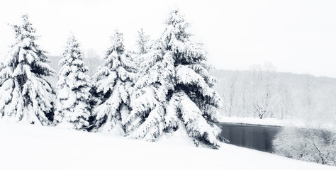 Heavy, Snow-Covered Pine Trees Next to a Black Pond During Winter Snow Storm.