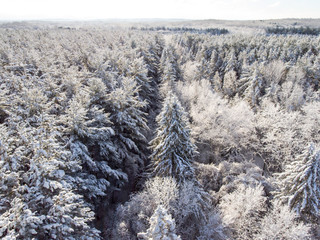 Overlooking A Snow Covered Forest 02
