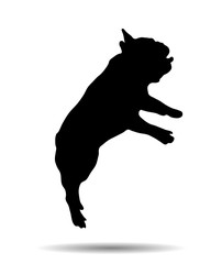 Silhouette of a French bulldog