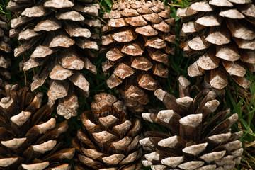 Pine cone zig zag
