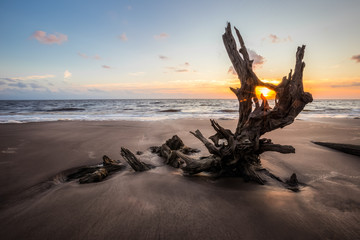 Sunrise photo of driftwood on Talbot Island
