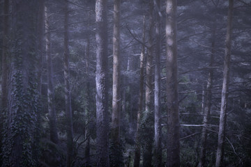 End of day in a misty forest